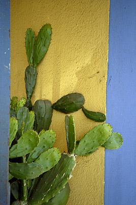 color & cacti