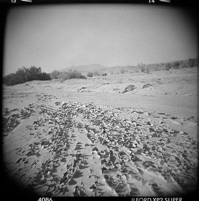 dryland #1