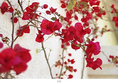 bloom 2004