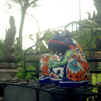 unhappy froggie