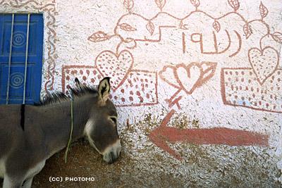 donkey -- love