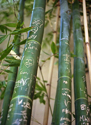 loves on the bamboo