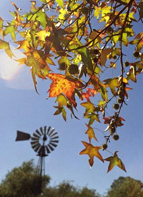 autumn colors #2