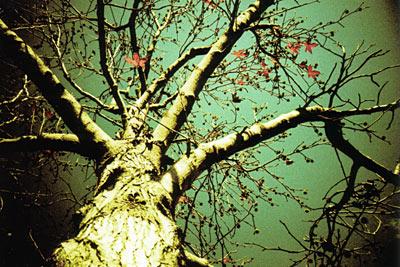 milo style - tree:2