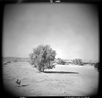 tree_holga.jpg