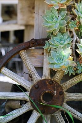 rust + succulents