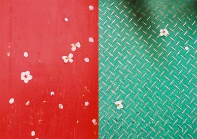 sakura on red & green