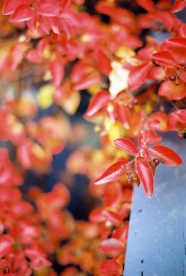 red in alaska #3