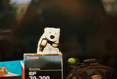 polar bear in anchorage