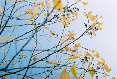 yellow in alaska #1