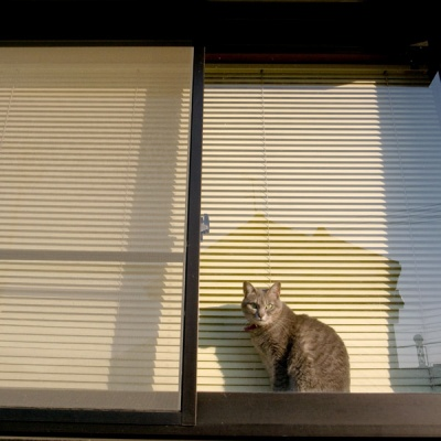 miaow #2