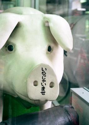 welcome piggy