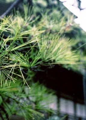 green in japan