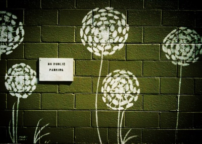 dandelions on the wall