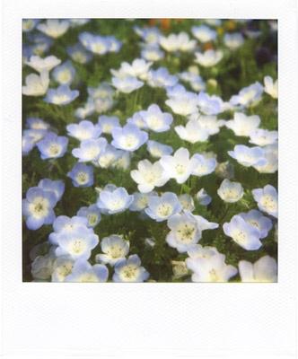 spring spring #2