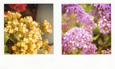 spring x 2