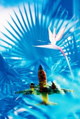 plane & bird of paradise