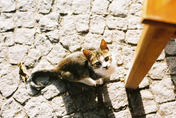A Cat in Bozcaada
