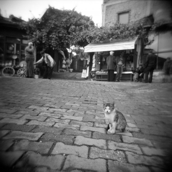 a cat in safranbolu #2