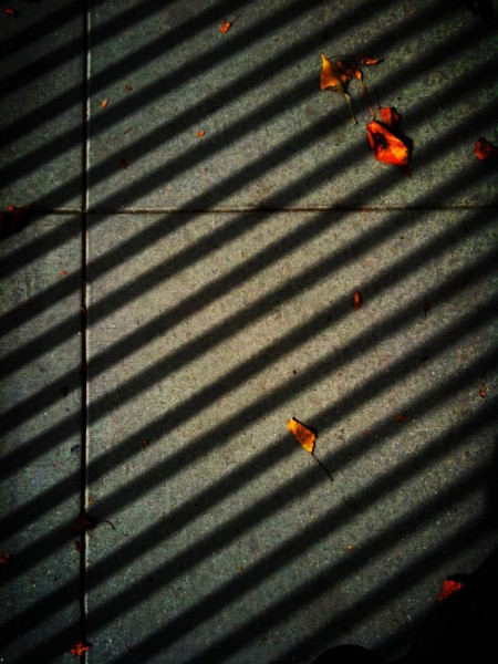 autumn color + shadow