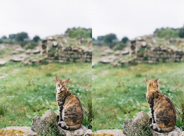 A Cat at the Ruins of Troy