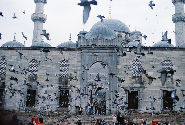 pigeons and mosque