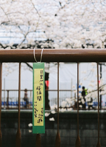 Sakura Haiku #2