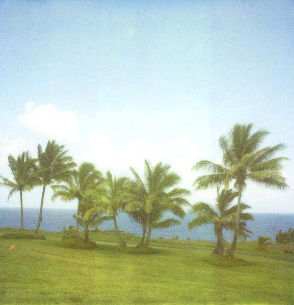 Palm Trees #1