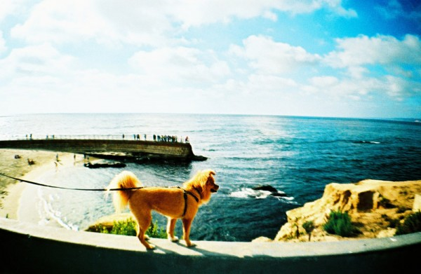 Doggie Looking at the Ocean