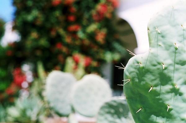 Cactus Spines #2