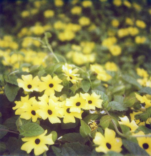 yellow + black dot