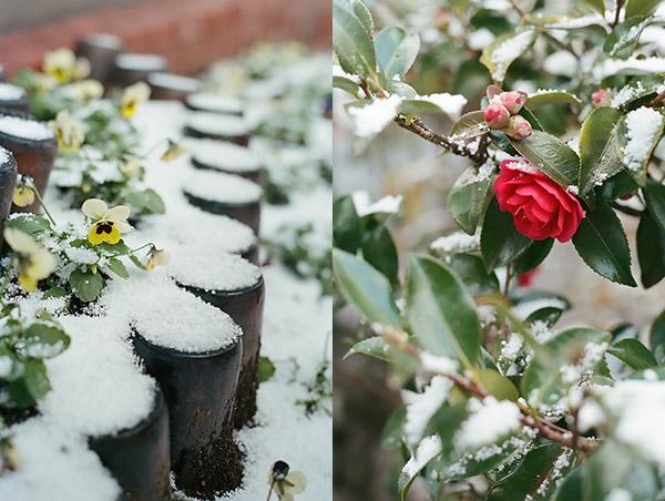 Downcast in the Snow