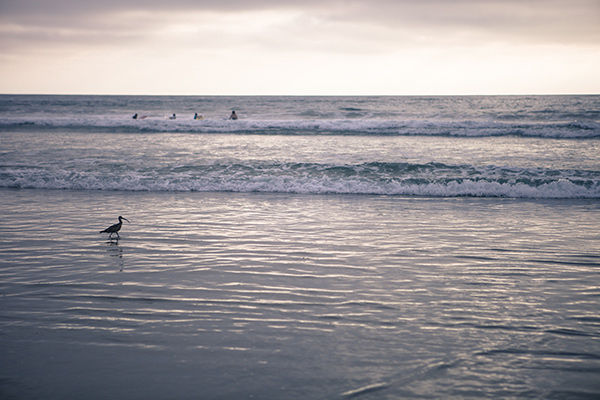 A Bird and Four Surfers