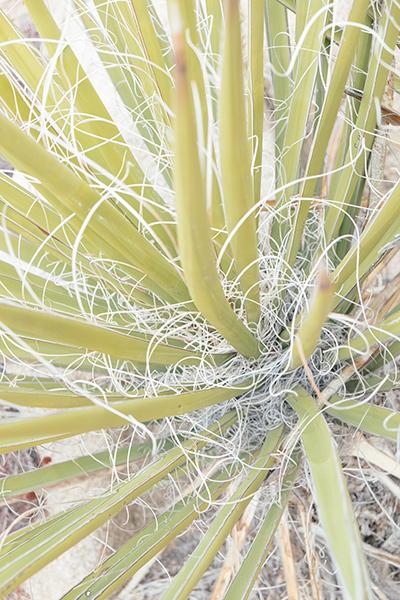 Desert Texture #3