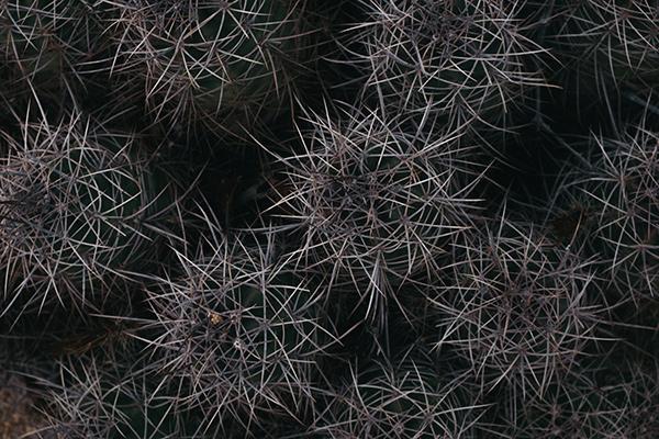 Desert Texture #5